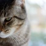 A cat scorned
