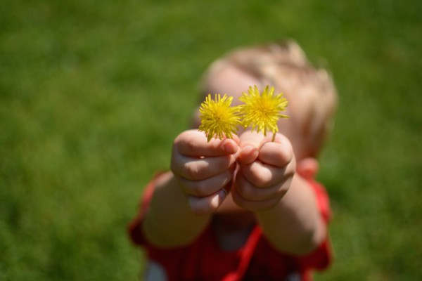 davidflowers 1
